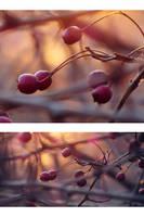 Something warm by rosaarvensis