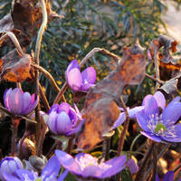 Spring! III by rosaarvensis