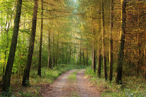 Larch avenue I by rosaarvensis
