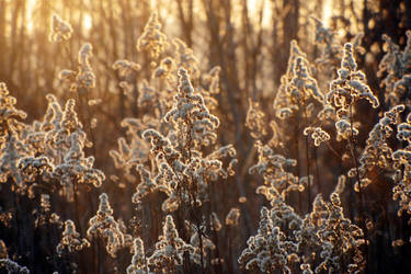 Soft wishes III by rosaarvensis