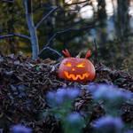 November's eve V by rosaarvensis