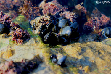 Mussels by Titou-Revasse