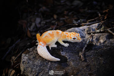 Firewater Leopard Gecko Magnet by LimitlessEndeavours