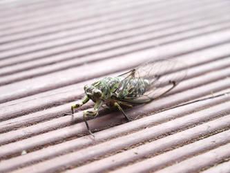 A Resting Cicada by yume-ryuu