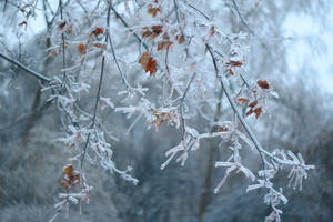 frozen world by da-bu-di-bu-da