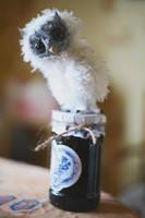 white owl by da-bu-di-bu-da