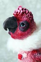 pink parrot by da-bu-di-bu-da