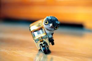 pygmy owl by da-bu-di-bu-da