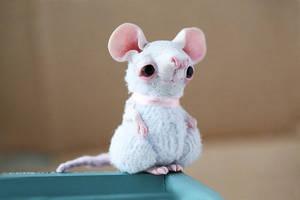 albino mouse by da-bu-di-bu-da