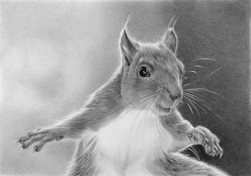 Pencil portrait of a squirrel by LateStarter63