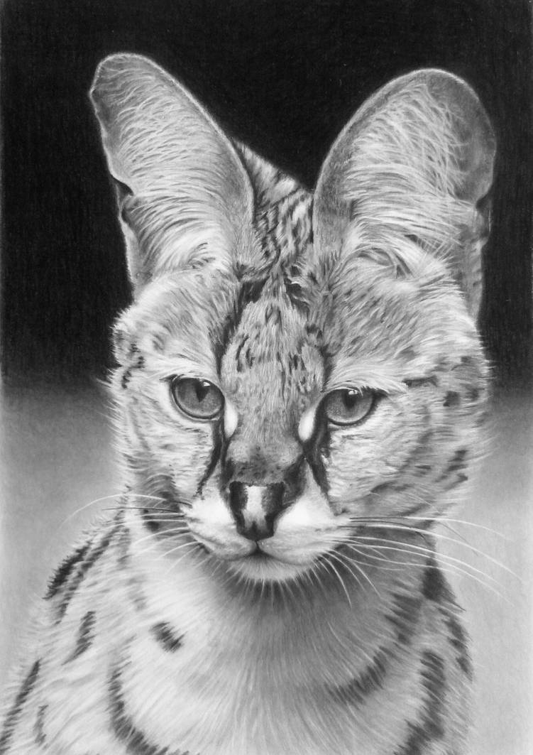 Pencil portrait of a serval by LateStarter63