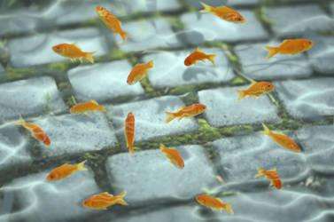 Goldfish on the Path by 0TashArt0