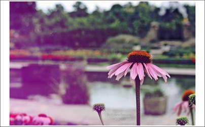 Kensington Gardens. by MissKeira