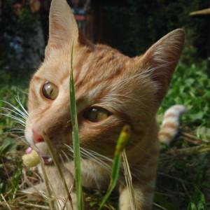 hikaru444's Profile Picture