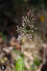 Macro plant by gtgv