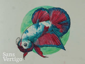 Marble Betta Fish by sansvertigo