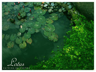 lotus by deliriousoracle