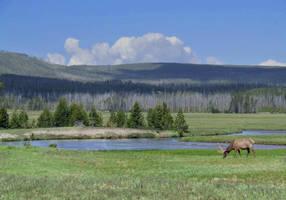 Solitary Elk by TricksyWeasel
