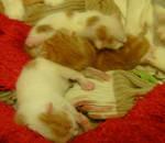 Kittiessss by krokus00