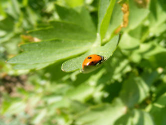 Ladybird  by TomorrowPhotographer