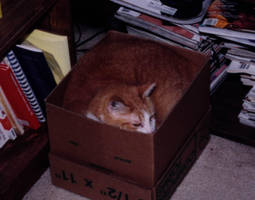 Boxed Cujo by SmilingY