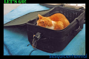 Suitcase cat by SmilingY