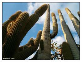 Cactus by francescotosi