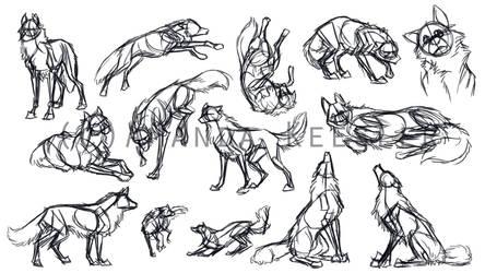 Wolf Gestures by Demonic-Pokeyfruit