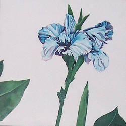 blueflower by indigospider