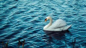 Lake Swan by PeaTree-Creations