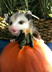 Happy Halloween by StormStrick