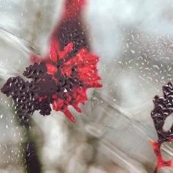 Icy garden II by Sea-Of-lLights