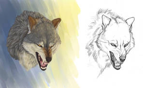 Angry wolf by Anisis