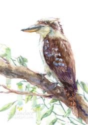 Kookaburra For Broson by Carcaneloce