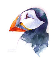 Atlantic Puffin by Carcaneloce