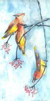 Cedar Waxwings by Carcaneloce