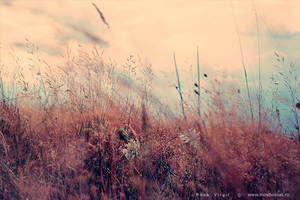 Nature by PopiX