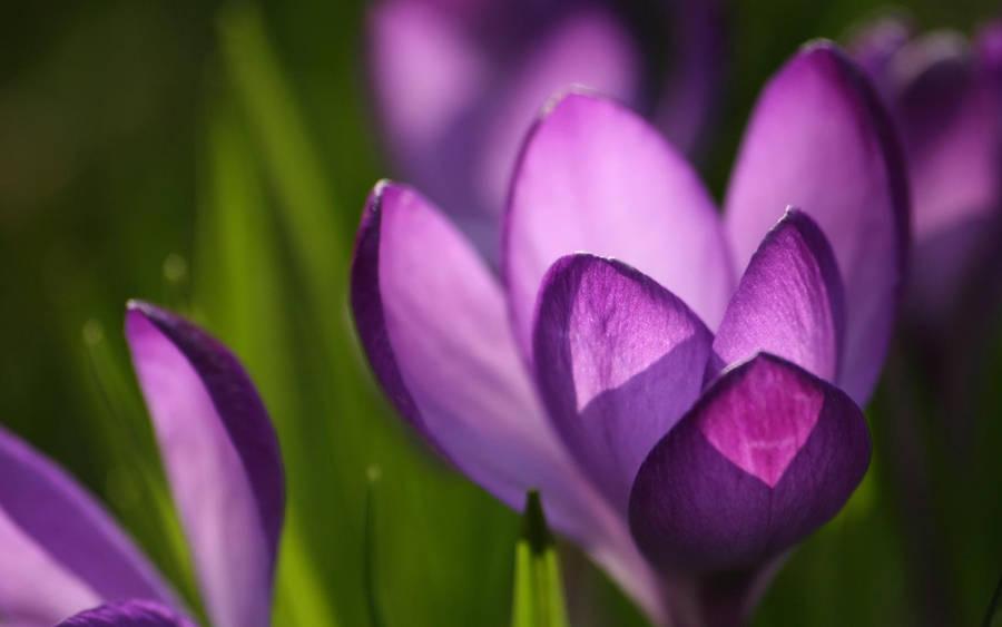 Flor... by malvescardoso