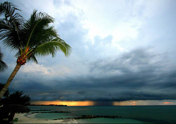 Tropical by PatriciaVazquez