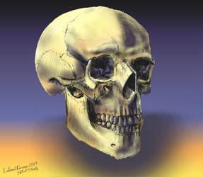 Skull Study 20140720 by LelandGreen