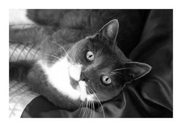 Kitty Love. by Windcharmer