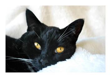 Pretty Kitty by Windcharmer