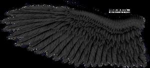Black Eagle Wing by K1ku-Stock
