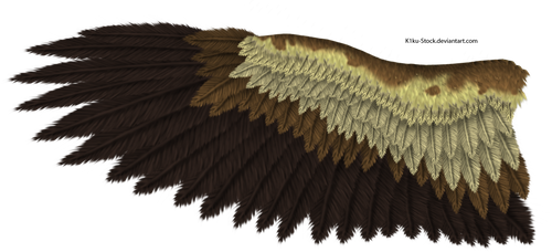 Eagle Wing by K1ku-Stock