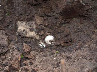 Soil 1 by K1ku-Stock