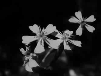 Black and White by gedehoogh