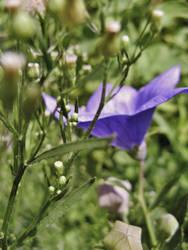 Flower by gedehoogh