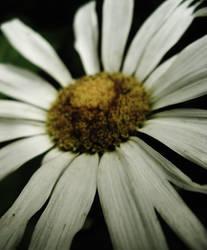 Flower #2 by gedehoogh