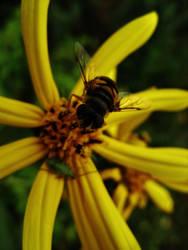 Bee by gedehoogh