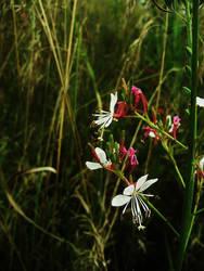 Wildflowers by gedehoogh